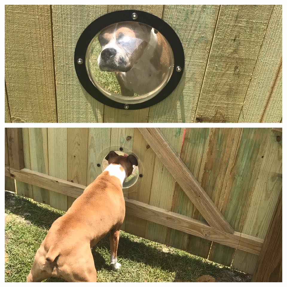 Doggie Domes - Pet Porthole - Pet Friendly Fence